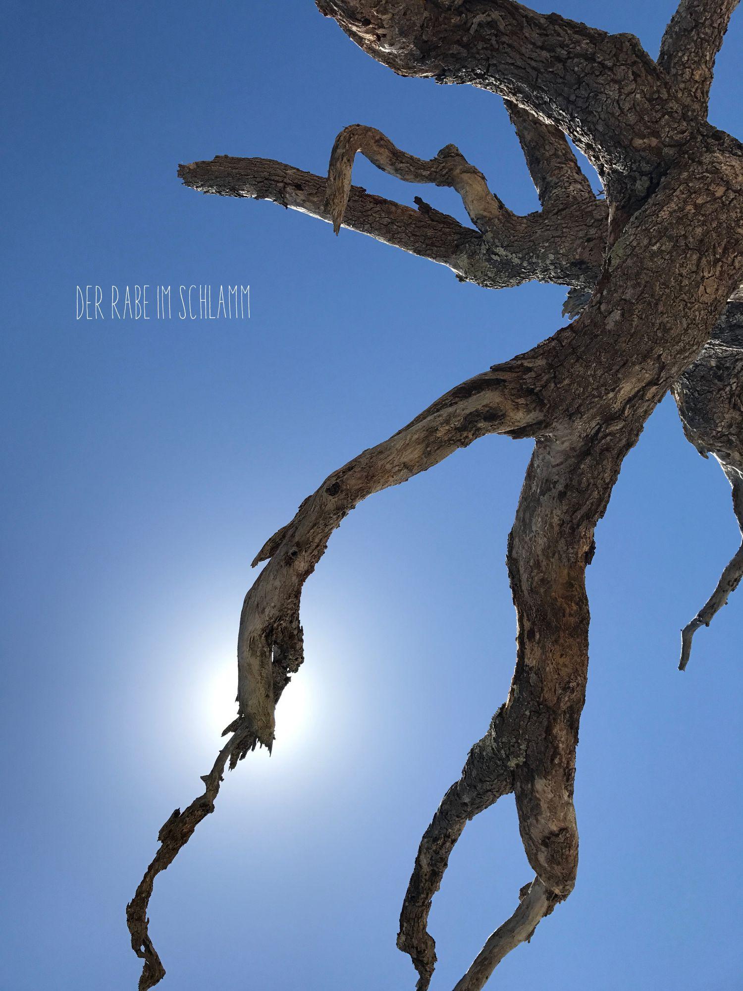 Driftwood Beach, Jekyll Island, Der Rabe im Schlamm