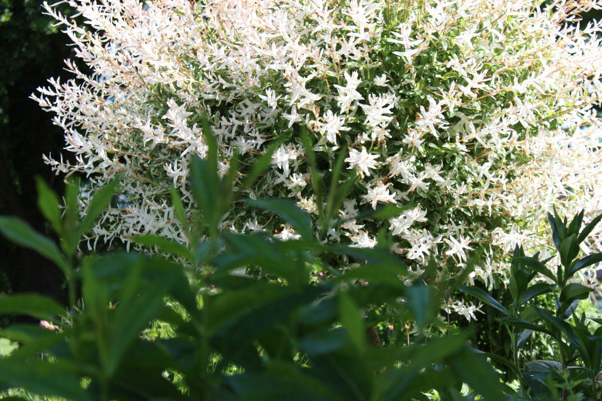 Garten, Der Rabe im Schlamm, Harlekinweide